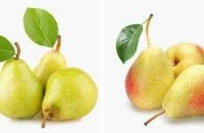 Купить овощи и фрукты